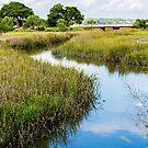 Blue Creek in Green Marsh by dbvirago