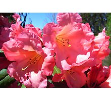 Heavenly Pink Photographic Print