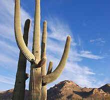 Good Morning Tucson  by Judy Grant