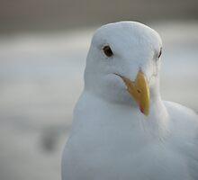 "Pacific Gull by Lenora ""Slinky"" Regan"