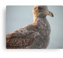 Brown Eyes Gull Canvas Print
