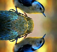 Reflecting Pool Nuthatch  by Jean Gregory  Evans