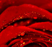 Red Rose macro Sticker