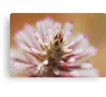 Outback Brush Canvas Print