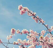 Sakura by BeatrizGR