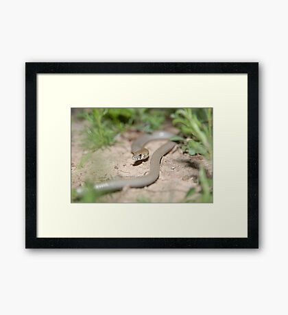 Legless Lizard Framed Print