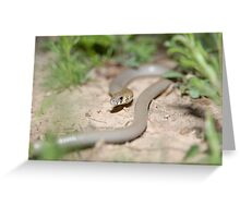 Legless Lizard Greeting Card