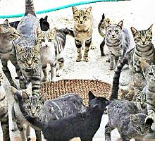 Cats Galore by missmoneypenny
