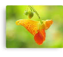 Jewelweed (Impatiens Capensis)  Canvas Print