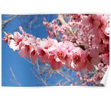 Blossom Spear Poster