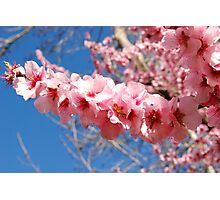Blossom Spear Photographic Print