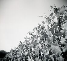 Vines by Leanne Smith