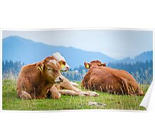 Cows in a mountain landscape Poster