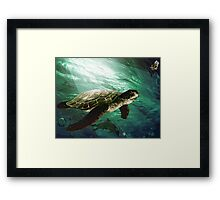 The turtle in the sea Framed Print