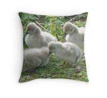 Black Swan Cygnets Throw Pillow