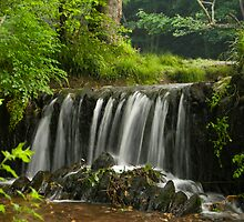 Falls at Plymbridge Woods  by DonDavisUK
