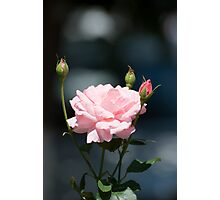 Like a rose Photographic Print