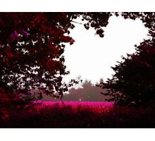 The Love of the Autumn Silence Photographic Print