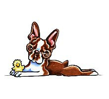 Colored Boston Terrier Photographic Print