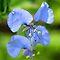 BLUE / PURPLE FLOWERS in Africa | BLOU / PERS BLOMME in Afrika