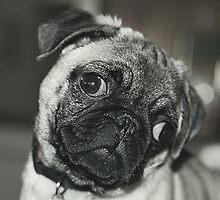 Black and white dog by loiteke