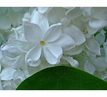 sweet jasmine Photographic Print