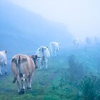 Fog and cows en mountain by Isard