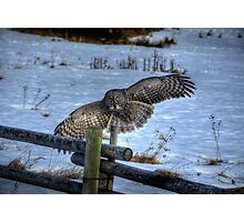 Landing Great Gray Owl and Snow Wildlife Raptor II Photographic Print