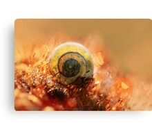Morning impression with small shell Canvas Print