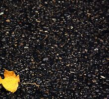 Lone Leaf by Gigi Leonard