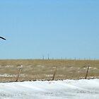 Dinosaur, South Dakota by CynLynn