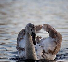 Signet on the Lake by NomadicShock