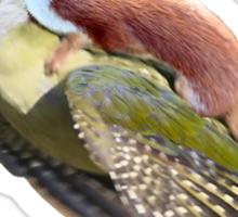 Flying Woodpecker Weasel Knievel Meme Sticker