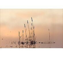 Rushes at sunset Photographic Print
