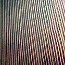 The Rice Fields #5 by Elizabeth Bravo