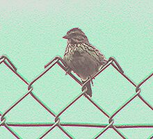 Baby sparrow sitting on a wire fence by drumsandkeys