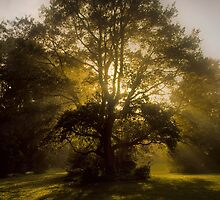 A Magic Faraway Tree? by Rosalie Dale