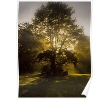 A Magic Faraway Tree? Poster