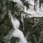 Icy Pine by Tina Billhymer