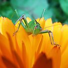 Green Hopper by JuliaWright