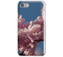 Cherry Blossoms in February iPhone Case/Skin