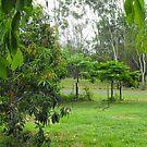 Leaves of Casamoira Frame More Trees by 4spotmore