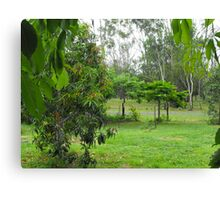 Leaves of Casamoira Frame More Trees Canvas Print