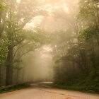Early Morning Fog by Missy Corrales