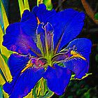 Bright blue Iris by Marilyn Baldey