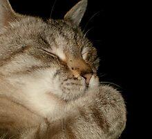 Hershey: Sleep by Crockpot