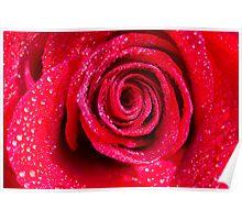 Spirals Of A Shimmering Red Rose Poster