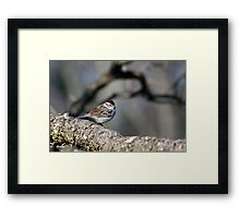 Wild Bird Art Chipping Sparrow Framed Print