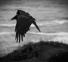 The Crow by LadyEloise