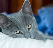 Stig on the bed by secondcherry
